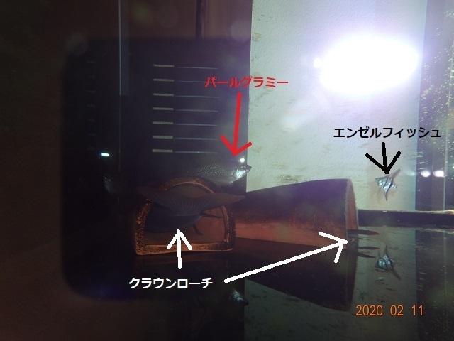DSC05523-2.jpg